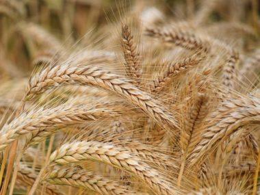 Healthy Alternative to refined flour
