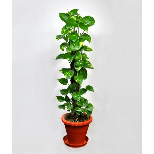 Indoor Plants that Purifiers Air
